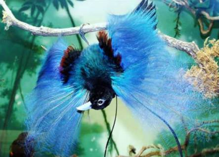 https://blogdotiocleber.files.wordpress.com/2010/07/6442f-blue-bird-of-paradise.jpg